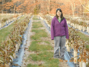 Winthrop seed orchard with New England Regional Science Coordinator Kendra Gurney, showing phenomenal growth at end of first summer after direct seeding.