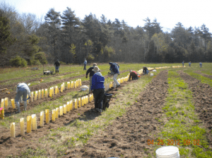 The Nature Conservancy's seed orchard in Phippsburg.