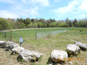Orchard fence from Basin Road