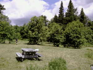Merryspring Orchard in 2011 after selection of trees for seed orchard stock.