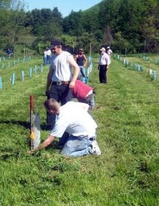 Houstatonic Valley Regional High School Students and Teachers at Great Mountain Forest Orchard speing planting and cleanup. Students have participated in planting each year since the orchard's inception. photo courtesy of Mary Lu Sinclair