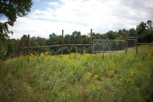 lower fence ablaze in a sea of yellow goldenrod