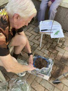 Jack replanting his seedling